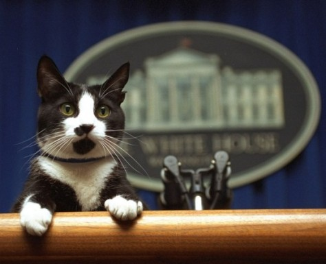 After being elected President, this psychic cat will now take your questions.