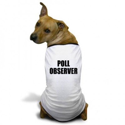 Dog observing an election.