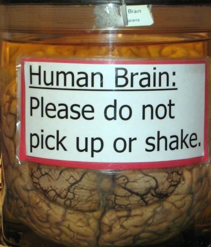 Human brain in a jar.