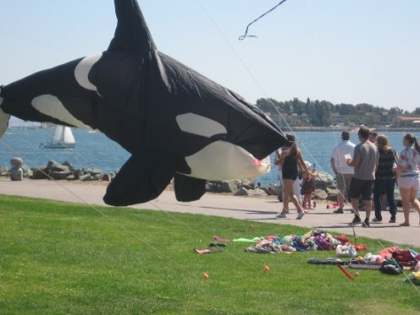 Killer whale one second before devouring eight tourists.