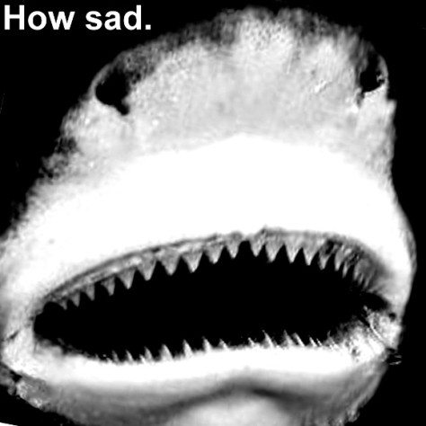 This shark is feeling very sad at the moment. That's quite obvious.